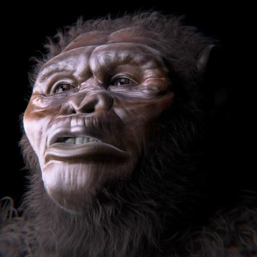 Ardipithecus ramidus - Viveu de 4,5 milhoes a 4,2 milhoes de anos atras. Descoberto em 1992, na Etiopia.