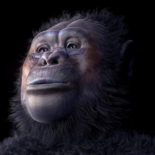 Australopithecus Afarensis - W21mercurion